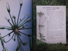 herbier-gourmand-1